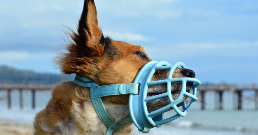 What Is Rubber Made Of >> The Dog Geek: Product Review: Baskerville Ultra Muzzle