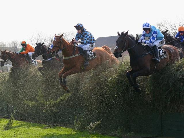 Grand national betting directory free binary options signals providers for healthy
