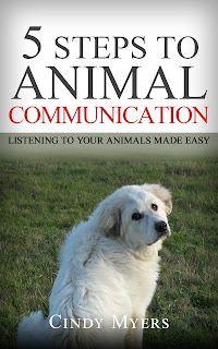 5 Steps to Animal Communication