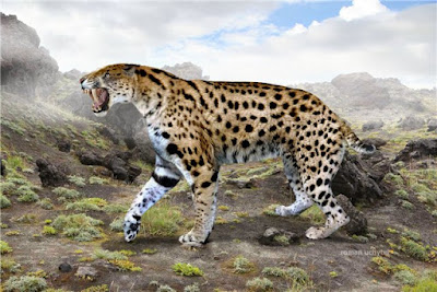 Felino prehistórico Xenosmilus hodsonae