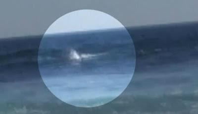 Peselancar diserang hiu putih besar.