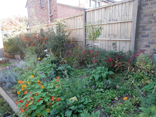 Diary of a permaculture (ish) garden, September and October 2018. From UK garden blogger secondhandsusie.blogspot.com #ukpermaculture #ukgardenblogger #suburbangarden #gardening