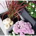 Getestet: Pflanzkübel aus Fieberglas oder herbstliches Blumenarrangement im Topfgarten und Baby Boo-Kürbisse im Eingangsbereich!