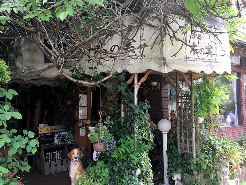 千葉県流山市にある木々に囲まれた純喫茶『木の実』の外観