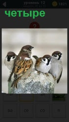 На камне сидят четыре воробья и ведут переговоры