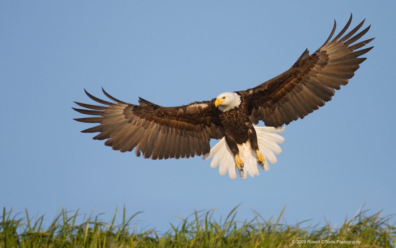 Πτήση στην ελευθερία ή περι πτήσεων ο λόγος... Εκεί που πετούν οι αετοί  !
