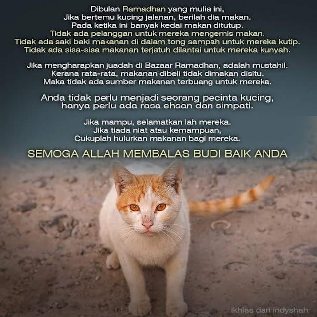 Kucing dan Bulan Ramadhan