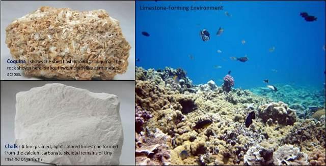 jenis dan lingkungan pembentukan batu gamping