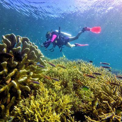 foto diving bawah laut raja ampat