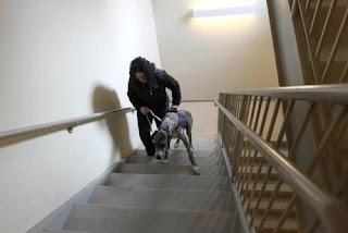cães e escadas