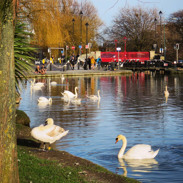 Dublin in a day: the swans of Portobello