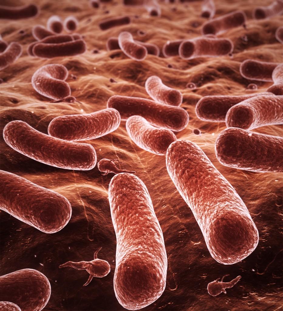 les probiotiques aideraient ils a maigrir. Black Bedroom Furniture Sets. Home Design Ideas