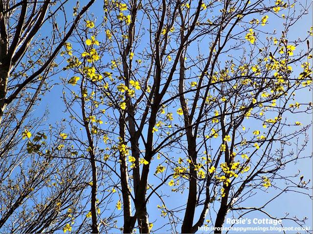 Beautiful Spring leaves on trees