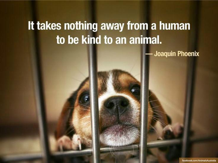 Of Animal Love Kindness Towards Stray Animals