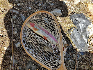Swift River rainbow trout catch and release