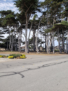 Esplanade Park in Pacific Grove California