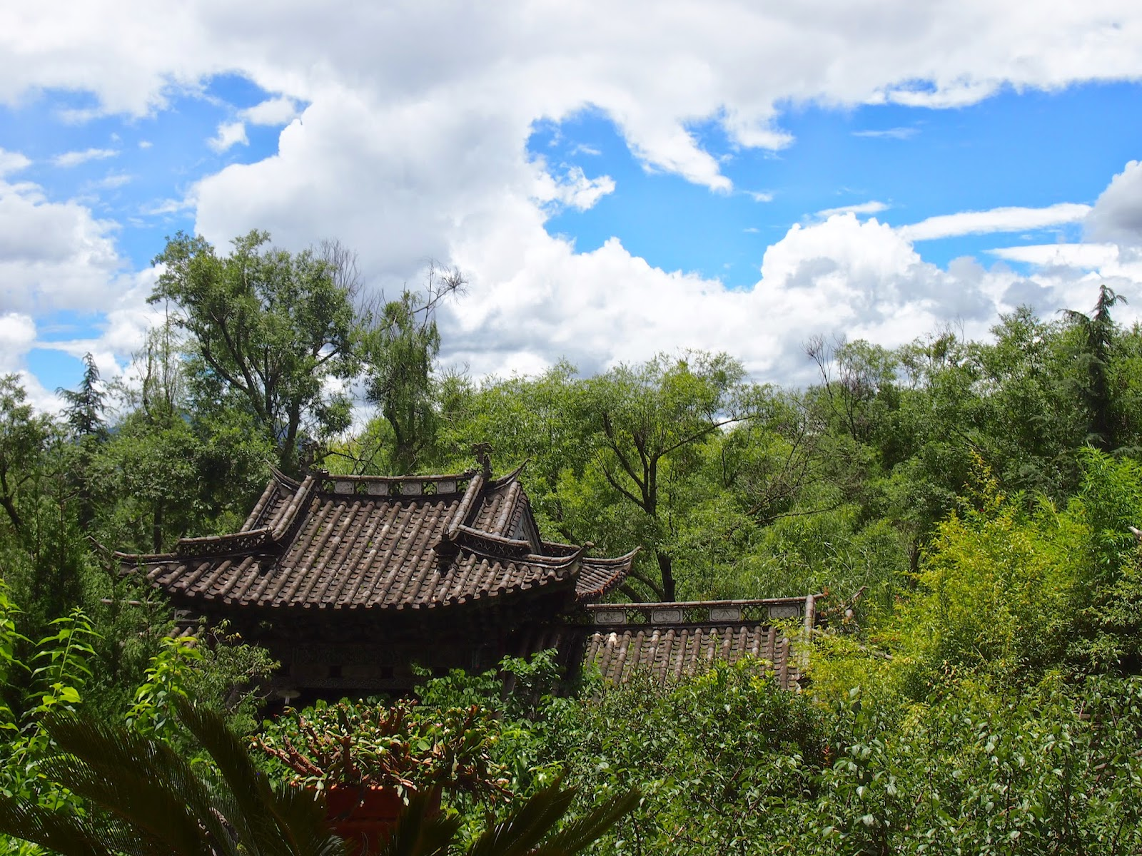 Lush park in lijiang heilongtan