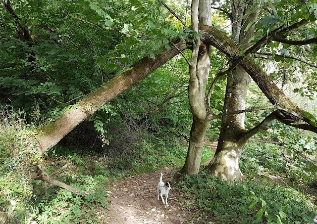 Bracken exploring along the river path