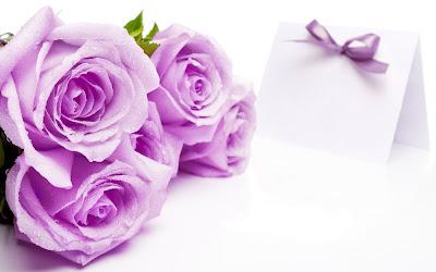 Sự tích hoa hồng tím