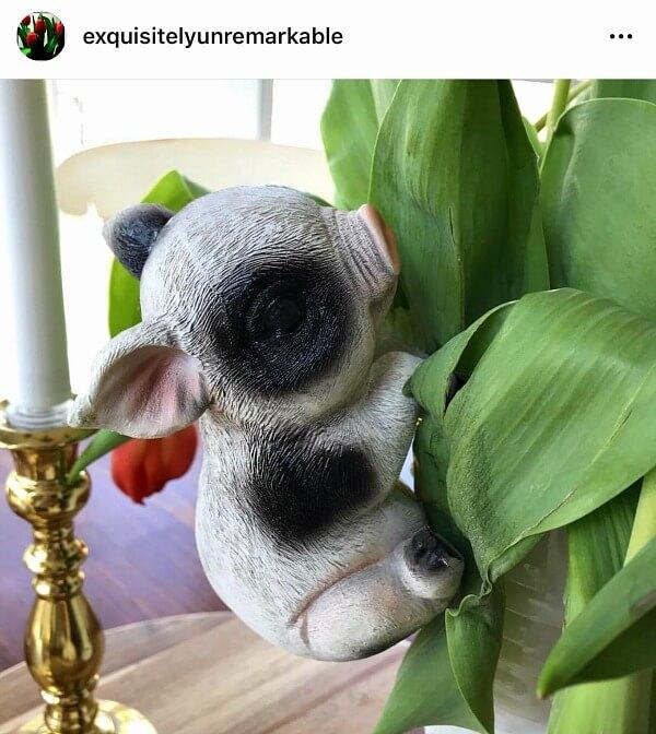 Instagram Piglet