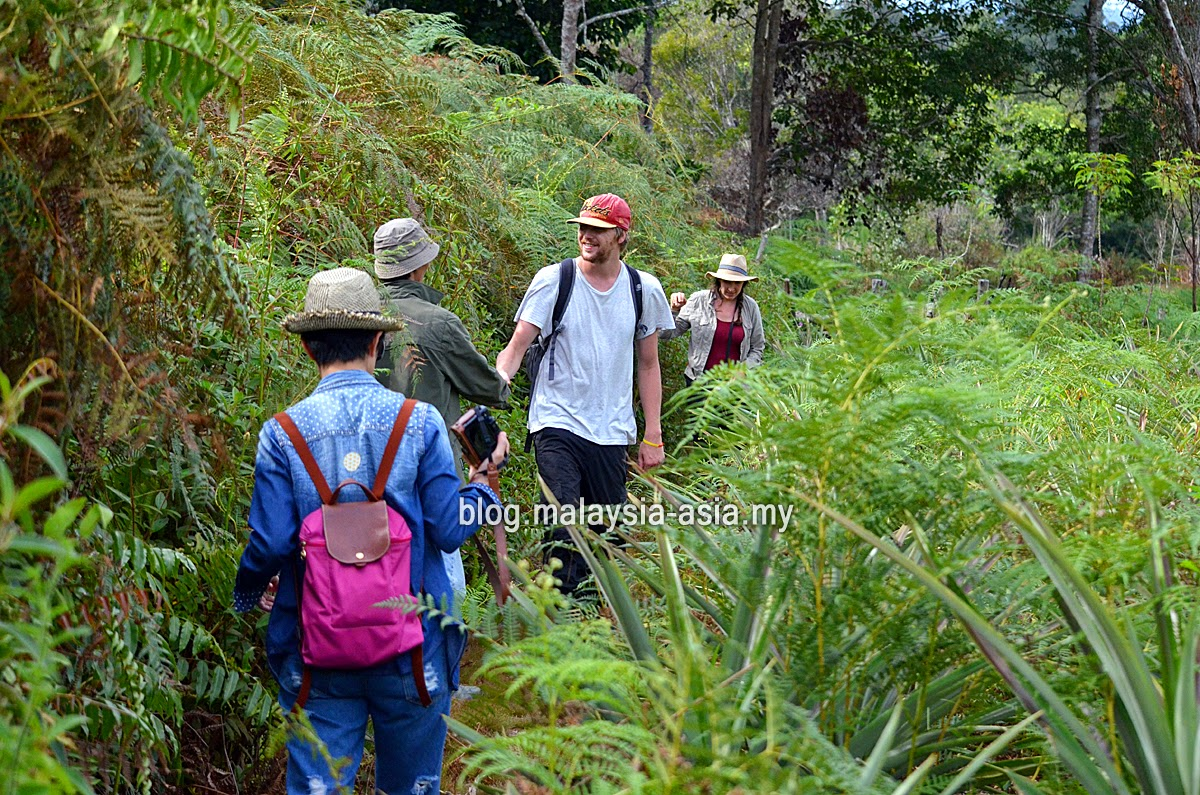 Hiking in Bario