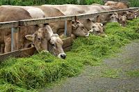 ternak menguntungkan, hewan ternak waktu singkat, hewan ternak paling menguntungkan, jenis ternak