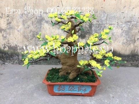 Hoa da pha le tai Giang Vo