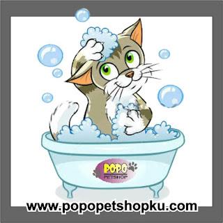 kucing mandi