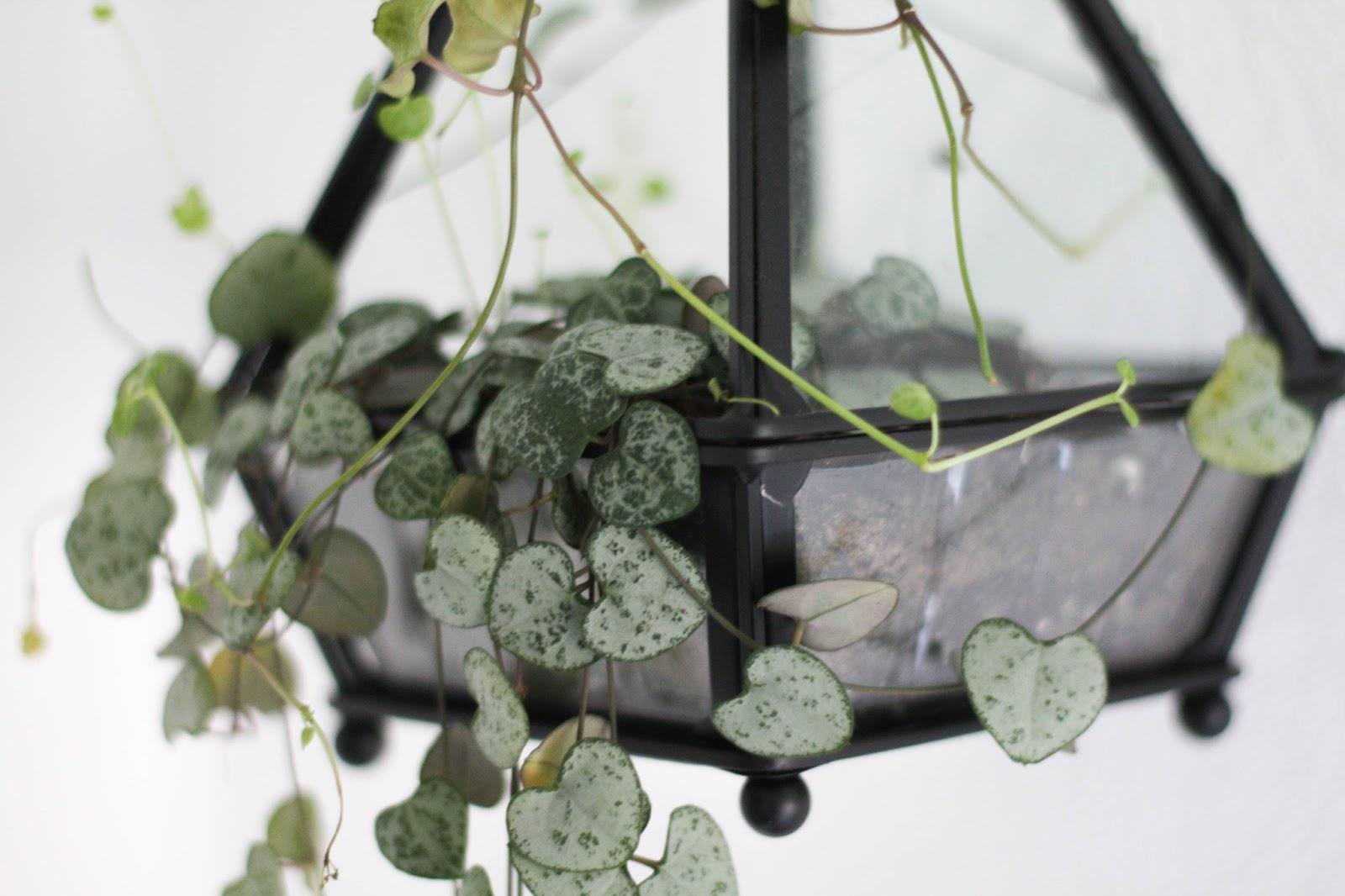 Hanging terrarium DIY