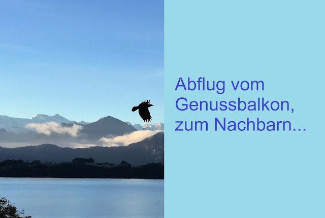 Schwarzer Vogel fliegt beim Balkon vorbei