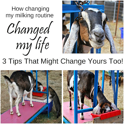 How changing my milking routine changed my life, and 3 tips that might change yours too. From Oak Hill Homestead