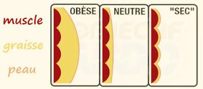 腹筋しても消える脂肪のパーセント
