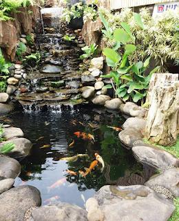 kolam koi dengan dekorasi tebing