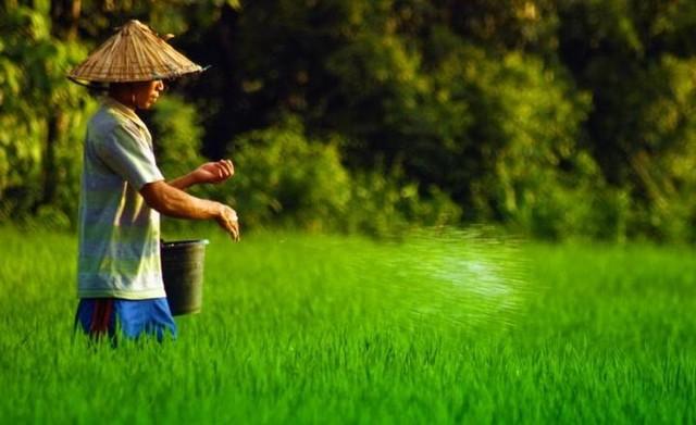 Pertanian Organik Dan Konvensional Belajar Pertanian Organik