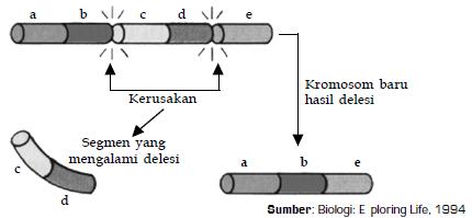 Pengertian, Contoh serta Macam-Macam Jenis Mutasi Gen dan Kromosom