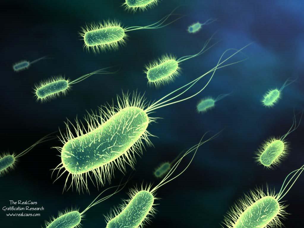 Microbiología para bioanálisis
