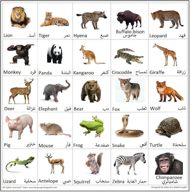 حيوانات الغابة والحديقة Forest animals