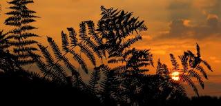 foto di piante al tramonto