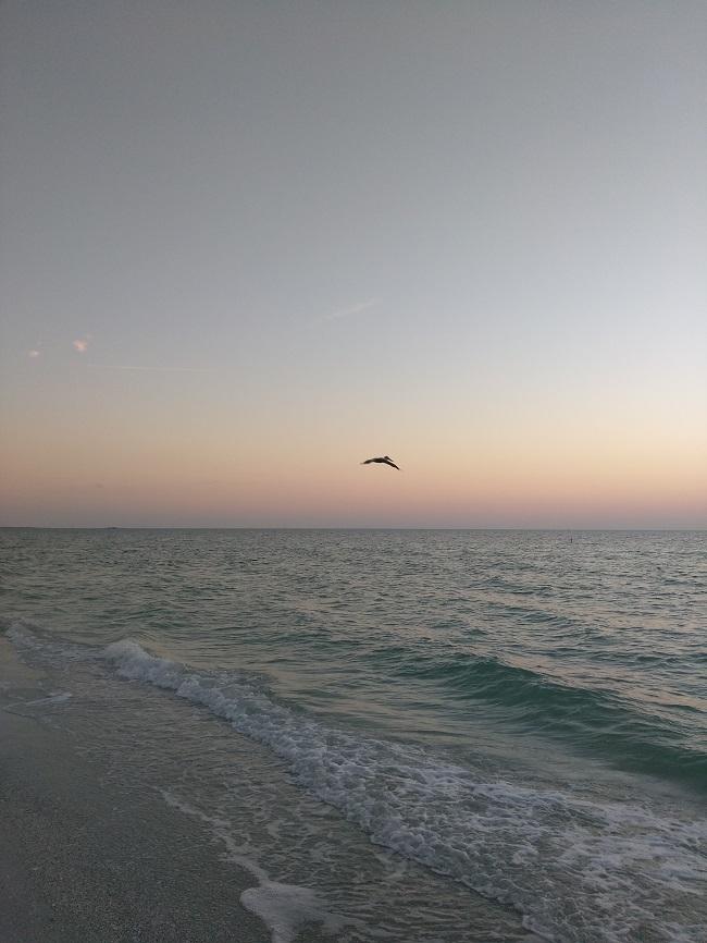bird flying along beach