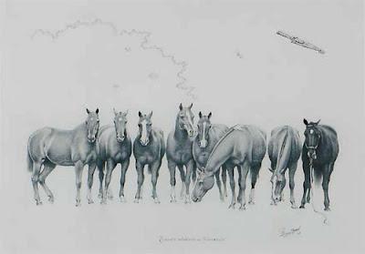 caballos tropilla