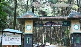 Wisata Hutan Pinus Bogor | Tempat Wisata di Bogor