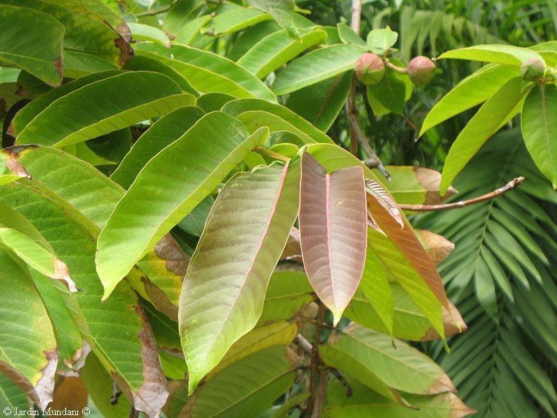 Sangrando en verde: Las antocianinas, los colores de las plantas ...