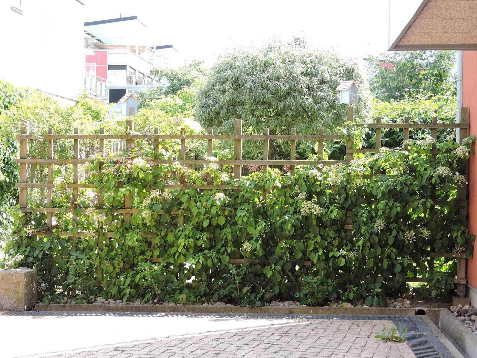 Comment Planter Une Vigne Grimpante inspiration au jardin: les plantes grimpantes