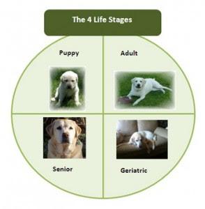 cães idade