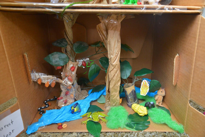 A School Of Fish Rainforest Model