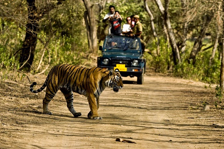 Jim Corbett National Park,Uttarakhand