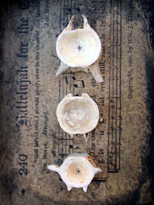 Found Bones - Nichola Battilana