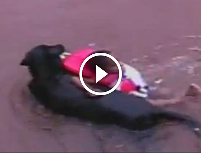امه رمته والكلب انقده ....كلب ينقذ طفلا حديث الولادة من القمامة ... سبحان الله