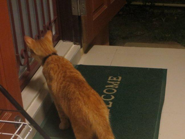 Кот хочет зайти в дом