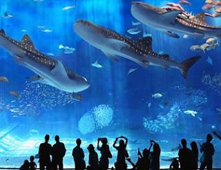Contoh Descriptive Text Wisata Aquarium dan Artinya